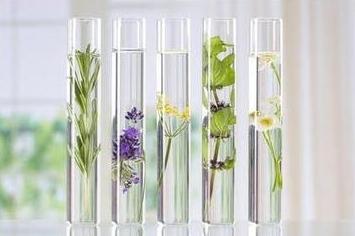 Energiafokozás aromaterápiával.