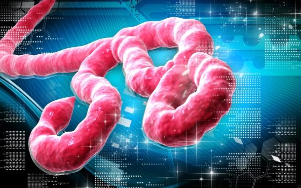 egeszsegugyelet-friss-hirek-ebola-virus-nagy