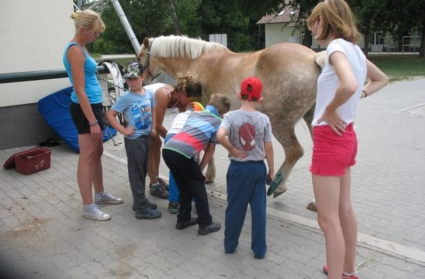 egeszsegugyelet-friss-hirek-lovasterapia-nagy2