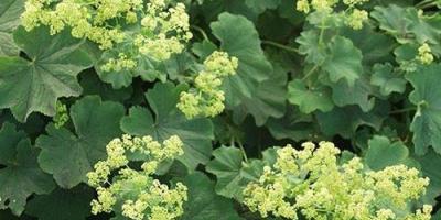 egeszsegugyelet-termeszetesen-gyogynovenyabc-palastfu