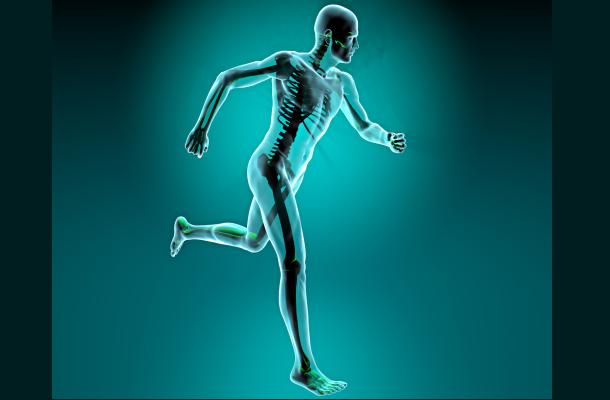emberi-csontrendszer-erdekessegek-egeszsegugyelet-nagy