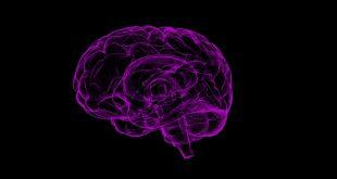 A második agyról, avagy az enterális idegrendszerről
