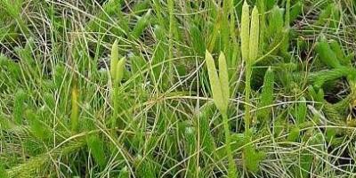 egeszsegugyelet-termeszetesen-gyogynovenyabc-korpafu