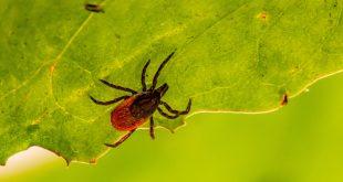 Tudnivalók a Lyme-kórról