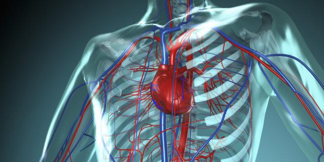 kuponok-egeszsegugyelet-angiologia-kiemelt