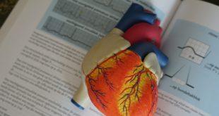 Tévhitek a szív- és érrendszeri betegségekről